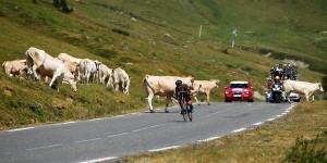 Barguil salva las vacas © Sky